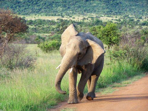 Africa_0963