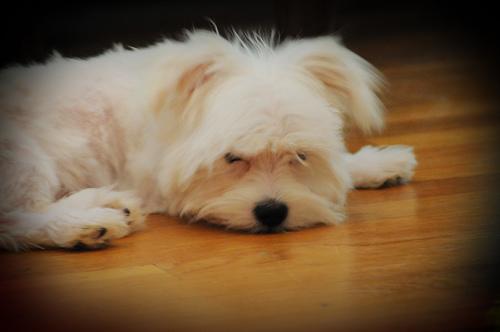 HannahSleeps.jpg by you.