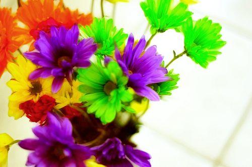 Flowers6977