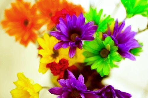 Flowers6978