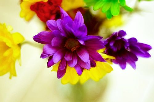 Flowers6979
