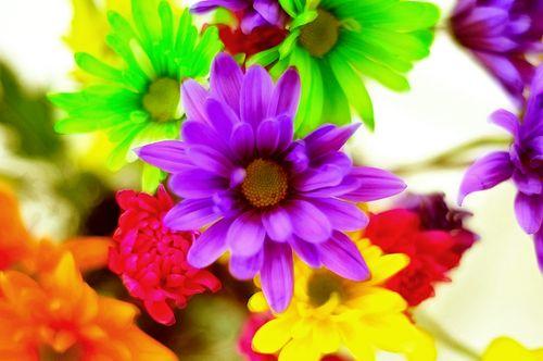 Flowers6980