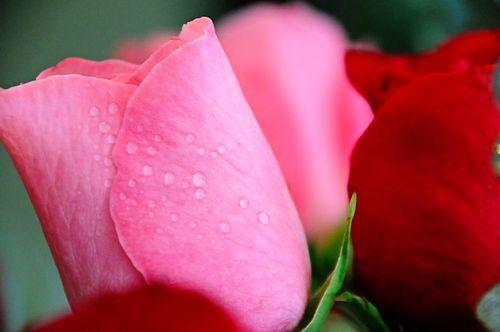 Flowers5258