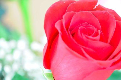 Flowers5254