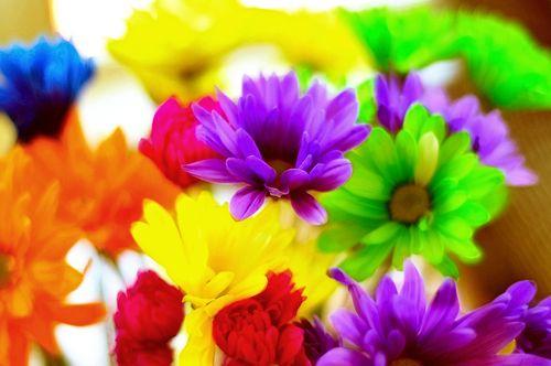 Flowers6963