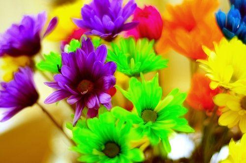 Flowers6965