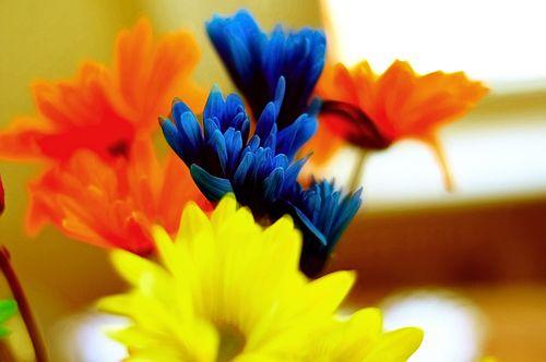 Flowers6966