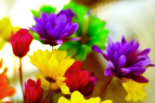 Flowers6967