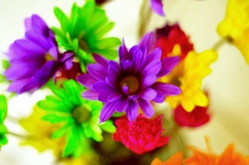 Flowers6973