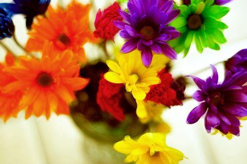 Flowers6975