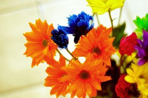 Flowers6976