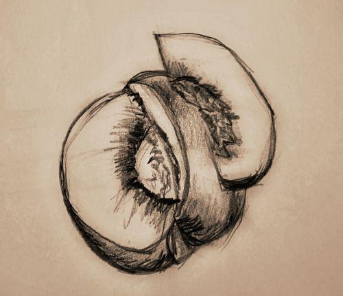 Sketch-Peach
