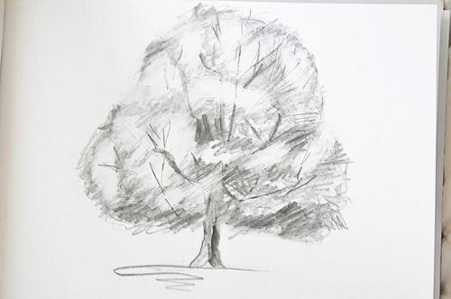 Tree_8967