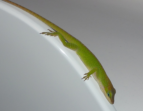 Gecko378.jpg by you.