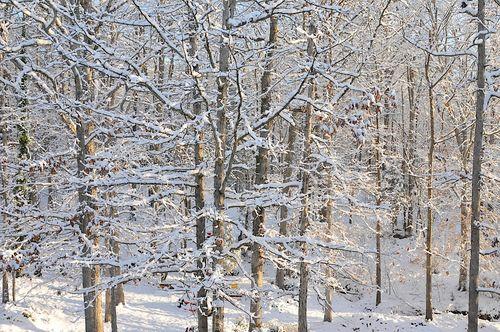 Snow2010_0960