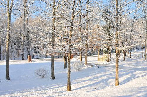 Snow2010_0964