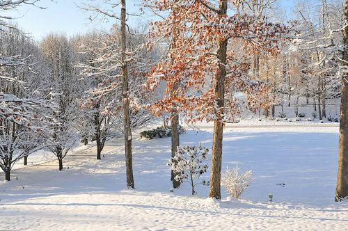 Snow2010_0965