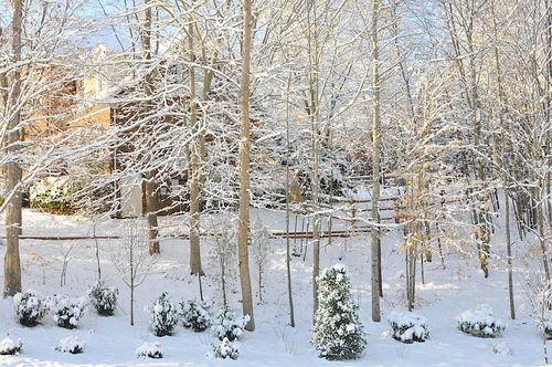 Snow2010_0978